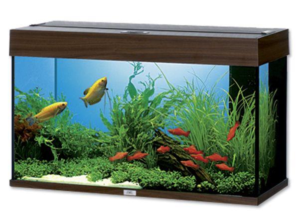 akvarium juwel rio led 125. Black Bedroom Furniture Sets. Home Design Ideas