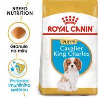 Royal Canin Cavalier King Charles Puppy granule pro štěně kavalír king charles španěl 1,5kg