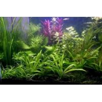 Kolekce rostlin pro: 50-100 litrové akvárium