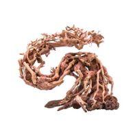 Kořen Dragon Bonsai S