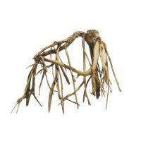 Kořen Mangle - cena za 1 kg