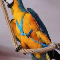 Kšíry pro papoušky L
