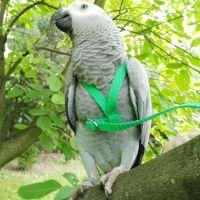 Kšíry pro papoušky M