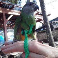 Kšíry pro papoušky S