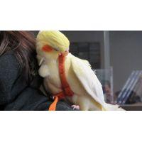 Kšíry pro papoušky XS soft