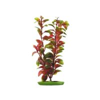 Rostlina Red Ludwigia 30 cm
