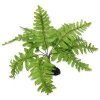 Rostlina REPTI PLANET kapradí Nephrolepis 20 cm ()
