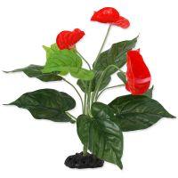 Rostlina REPTI PLANET kvetoucí Anthurium 40 cm ()