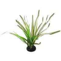Rostlina REPTI PLANET travina Spartina 30 cm ()