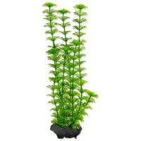 Rostlina TETRA Ambulia M (1ks)