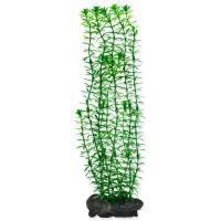 Rostlina TETRA Anacharis L (1ks)