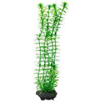 Rostlina TETRA Anacharis M (1ks)