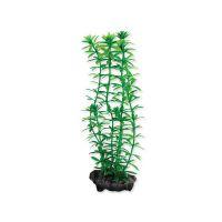 Rostlina TETRA Anacharis S (1ks)