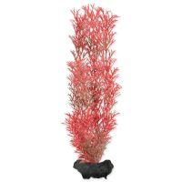Rostlina TETRA Foxtail Red M (1ks)