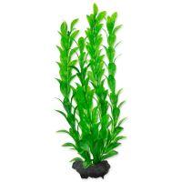 Rostlina TETRA Hygrophila M (1ks)