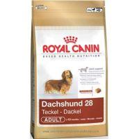Royal Canin MINI JEZEVČÍK 500 g