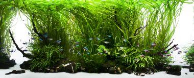 Yokuchi startovací balíček pro akvaria do 600 litrů