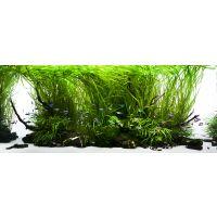 Yokuchi startovací balíček pro akvaria do 60 litrů