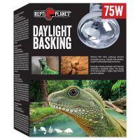 Žárovka REPTI PLANET Daylight Basking Spot (75W)